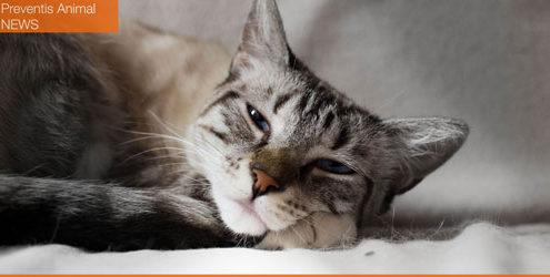 santé animale : blocage urinaire chez le chien et le chat