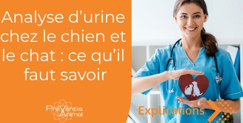 Analyse urinaire chat chien