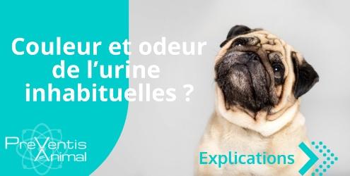 Problème urinaire test santé analyse urinaire chat