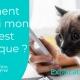 Diabète du chat test vétérinaire