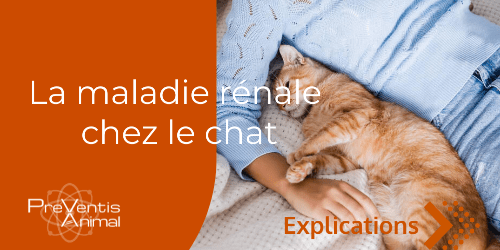 Maladie rénale chats